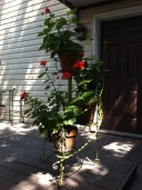 Garden (06)
