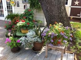 Garden (11)