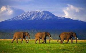 Kilimanjaro - 6-26-13