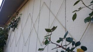 tAB - Heirloom Roses (4)