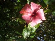 tAB - Kauai (16)