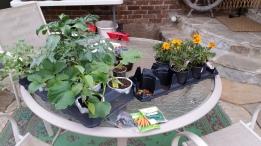 tAB - raised garden (9)