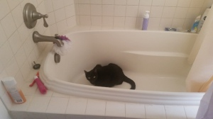 Sorry cat, my bathtub is not an option!